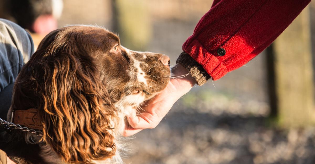La protección y derecho de los animales en el aula