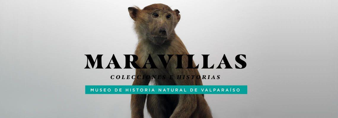 Maravillas: Colecciones e historias en CCPLM