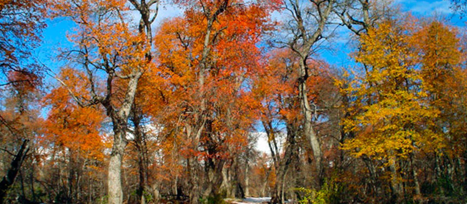 A disfrutar los últimos días de otoño