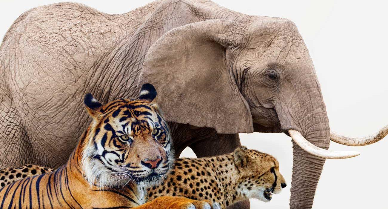 Zoológicos y museos: ¡Por un invierno más entretenido!